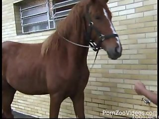 Good-looking girls with big asses are playing with a big stallion